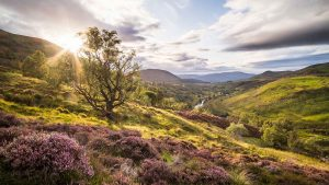 Birchfield Landscape